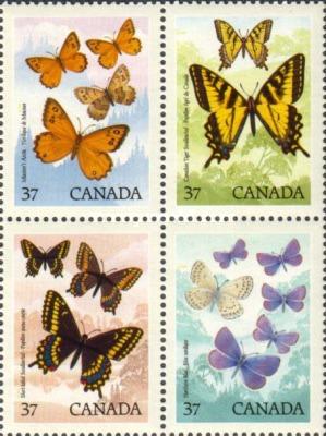 [Canadian Butterflies, type ]