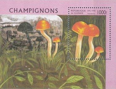 [Fungi, type ]