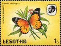 [Butterflies, Tip PE]