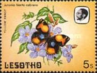 [Butterflies, Tip PI]